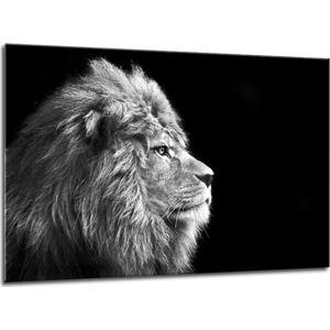 Obraz Styler Glasspik Canvas Animals Lion, 70 x 100 cm
